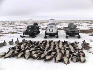 Охота на гуся на севере